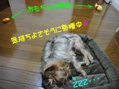 S_dsc04807