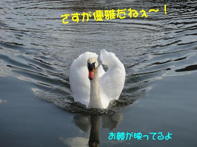 S_dsc05241