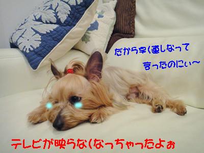 S_dsc00791