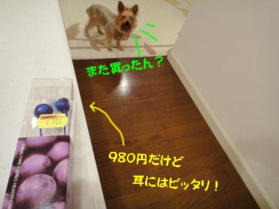 S_dsc07900