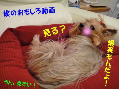 S_dsc00332