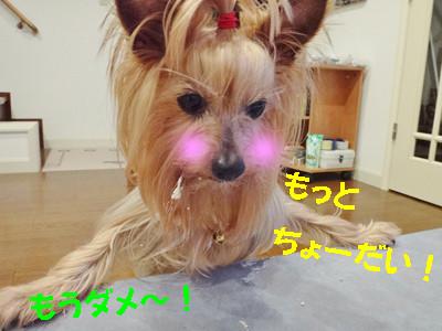 S_dsc03730