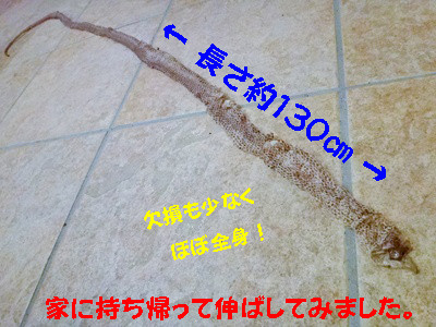 S_dsc08390