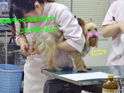 S_dsc08594
