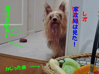 S_dsc02449