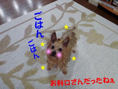 S_dsc06990