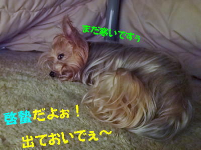 S_dsc07938